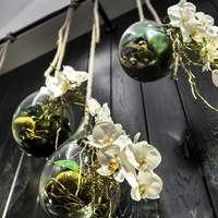 胡蝶蘭の新芽に出会えるという格別な幸せ