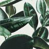 観葉植物とはどんなモノ?