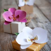 胡蝶蘭が贈り物に人気の理由とおすすめ色別6選!