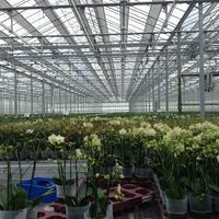胡蝶蘭を福岡で買うなら生産者から