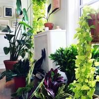 観葉植物を室内に飾る5つのメリットとおすすめ10選