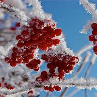 【解説】ウンベラータを冬越しさせる5つのコツ