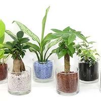 初心者でも簡単!観葉植物の寄せ植えや多肉植物/エラプランツの育て方