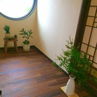 和風観葉植物でお部屋の高級感をアップさせよう