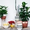 観葉植物にはおしゃれな鉢カバーを!使い方のポイントとおすすめ12選