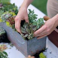 注目!多肉植物の寄せ植えの作り方