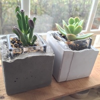 最高の組み合わせ!セメント・コンクリートの鉢カバーと観葉植物【おすすめ3選】
