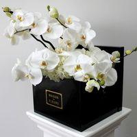【徹底解説】胡蝶蘭を通販で買うおすすめ方法