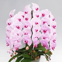 3本立ちの胡蝶蘭を贈るのにオススメのシーン5選