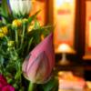 法事・法要のお供え花に胡蝶蘭を贈るときのマナー