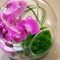 ひと味違う紫色の胡蝶蘭の魅力と花言葉