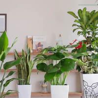 育てやすい自宅観賞用の観葉植物!目的別おすすめ9選のご紹介