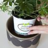 大型観葉植物の魅力が増す10号鉢カバーの魅力を徹底解説