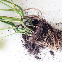 モンステラの土ならおまかせ!植え替えから育て方まで
