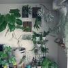 観葉植物を贈ろう!おすすめのお祝いシーンと喜ばれる品種9選