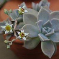 珍しい観葉植物と品種を3つご紹介