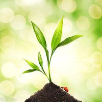 様々な植物を通販で購入する方法