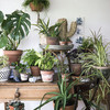 初心者でも育てやすい人気の観葉植物8選