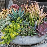素敵!多肉植物寄せ植えの鉢や鉢カバー