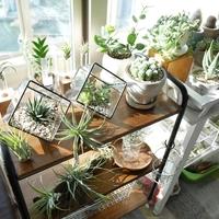 どの観葉植物を選ぶ?観葉植物選びのポイントと育て方まとめ