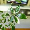 観葉植物はインテリアにおすすめ!
