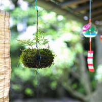 夏に最高のインテリア!吊りしのぶを知っていますか?