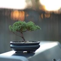 【入門編】今が旬!盆栽の育て方とおしゃれなインテリア