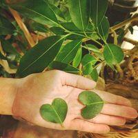 希少な品種アマゾンオリーブ!育て方とインテリアにおすすめ3選のご紹介