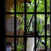 シュロチクの育て方と花言葉や風水効果まで!おすすめ3選もご紹介