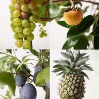 果樹を育てる喜びをご存知ですか?お祝いにもおすすめ