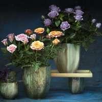 初めてのバラ栽培に鉢植えをおすすめする3つの理由!育て方や贈り方