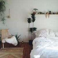 寝室に観葉植物を置きませんか?その効果とおすすめ観葉植物セットをご紹介