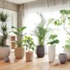 価格から選ぶ!おしゃれな観葉植物おすすめ厳選紹介