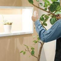 観葉植物レンタルサービスの比較!おすすめサービスのご紹介