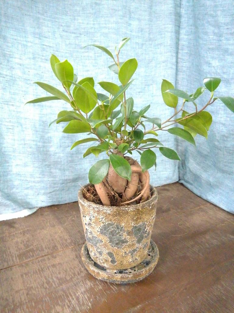 観葉植物    エキゾチックなお風呂に置く観葉植物 2点セット(4号×2)