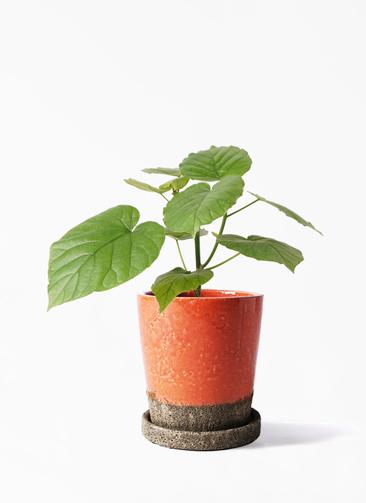 観葉植物 フィカス ウンベラータ 4号 ノーマル ヴィフポット オレンジ 付き