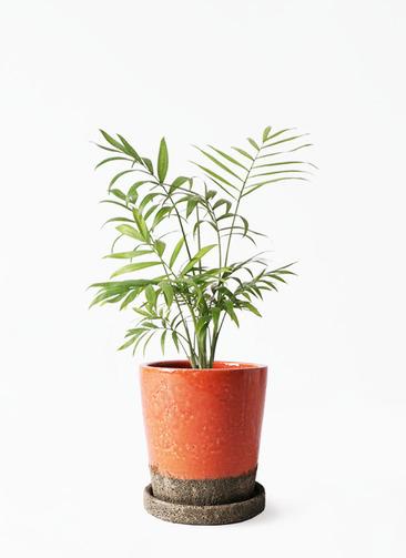 観葉植物 テーブルヤシ 4号 ヴィフポット オレンジ 付き