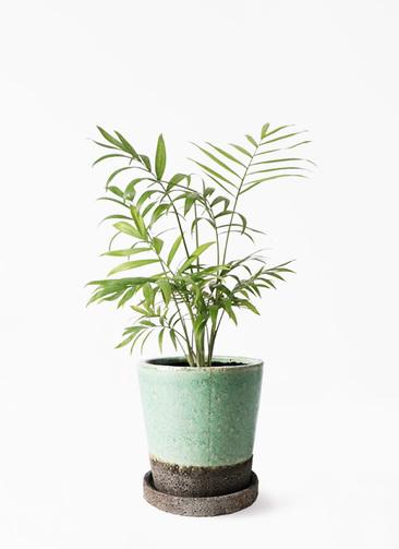 観葉植物 テーブルヤシ 4号 ヴィフポット ミントグリーン 付き
