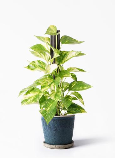 観葉植物 ポトス 4号 フェイバーポット ブルー 付き
