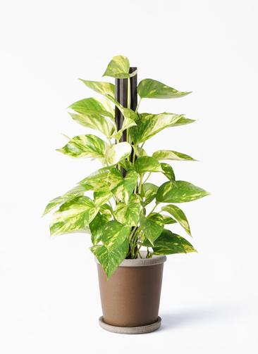 観葉植物 ポトス 4号 キャメルポット ブラウン 付き