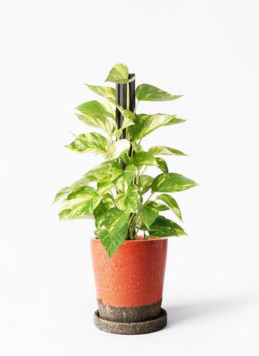 観葉植物 ポトス 4号 ヴィフポット オレンジ 付き
