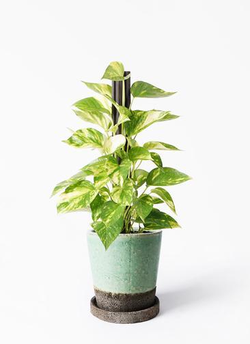 観葉植物 ポトス 4号 ヴィフポット ミントグリーン 付き