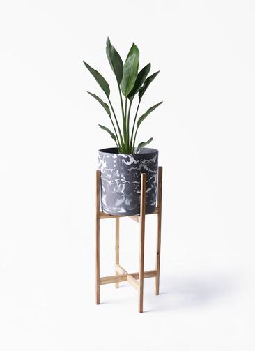 観葉植物 ストレリチア レギネ 6号 ホルスト シリンダー マーブル ウッドポットスタンド付き