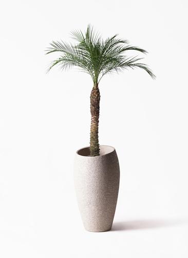 観葉植物 フェニックスロベレニー 8号 エコストーントールタイプ Light Gray 付き
