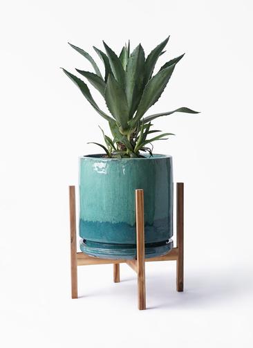 観葉植物 アガベ 8号 アメリカーナ ビトロ エンデガ ターコイズ ウッドポットスタンド付き