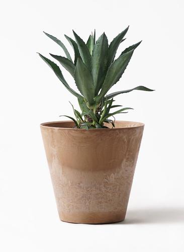 観葉植物 アガベ 8号 アメリカーナ アートストーン ラウンド ベージュ 付き