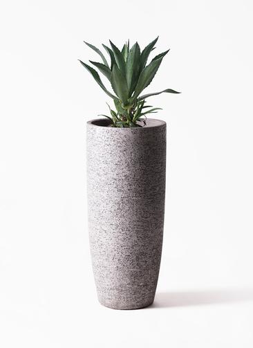 観葉植物 アガベ 8号 アメリカーナ エコストーントールタイプ Gray 付き