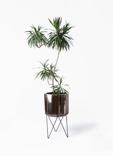 観葉植物 ドラセナ ナビー 8号 L字 ビトロ エンデカ ゴールド アイアンポットスタンド 付き