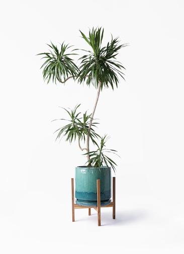 観葉植物 ドラセナ ナビー 8号 L字 ビトロ エンデガ ターコイズ ウッドポットスタンド付き