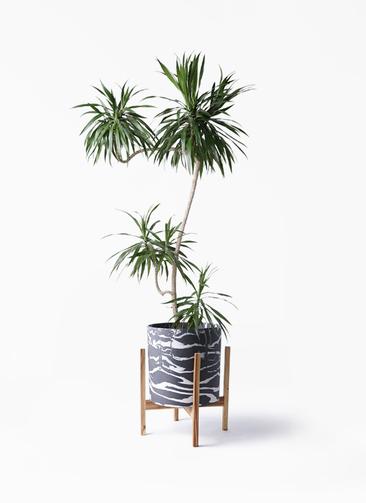 観葉植物 ドラセナ ナビー 8号 L字 ホルスト シリンダー マーブル ウッドポットスタンド付き